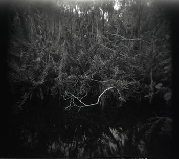 Black and white image of a lake surface with floating grasses.
